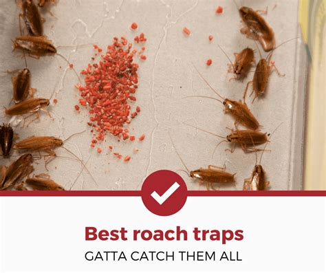 best cockroach best cockroach traps buying guide pest strategies