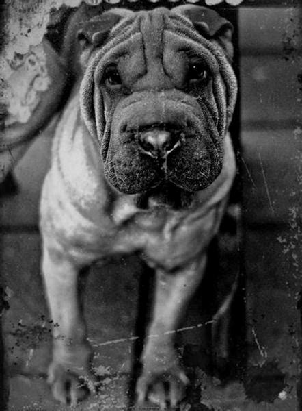 Black and White Pictures of Animals - XciteFun.net