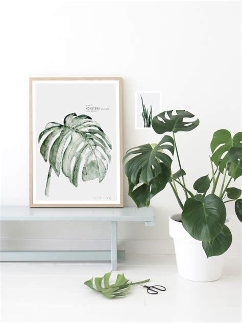 Plante Interieur Facile by 5 Plantes D Int 233 Rieur Faciles D Entretien Lili In