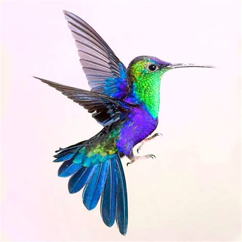 colorful hummingbird tattoo designs colorful hummingbird design