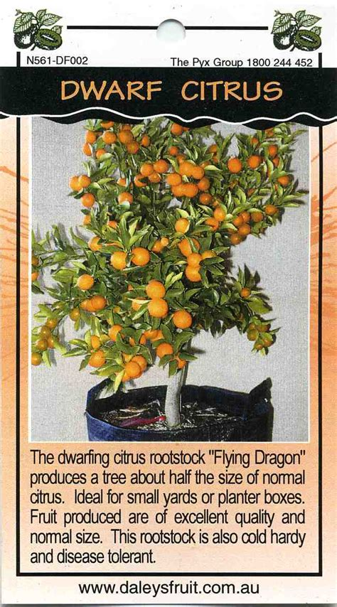 Mail Order Nursery Catalogs by Dwarf Citrus Buy Dwarf Citrus The Dwarfing Citrus Rootstock