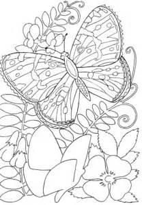 Desenho De Borboleta Entre As Flores Para Colorir  Desenhos sketch template