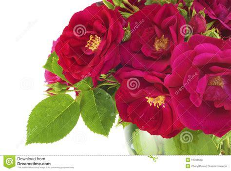 imagenes hermosas brillantes imagenes de rosas hermosas brillantes imagui