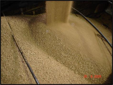 Bungkil Kedelai Argentina distributor bahan baku pakan ternak distributor bahan
