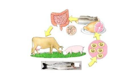 Obat Cacing Praziquantel cara menghilangkan cacing pita di tubuh manusia
