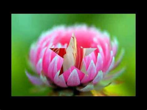 imagenes mas lindas del mundo las flores mas lindas y raras del mundo youtube