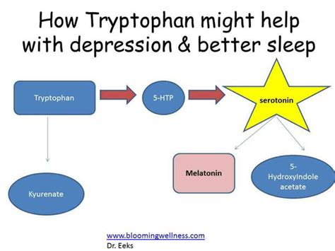 carbohydrates serotonin tryptophan and 5 htp for depression and sleep does it