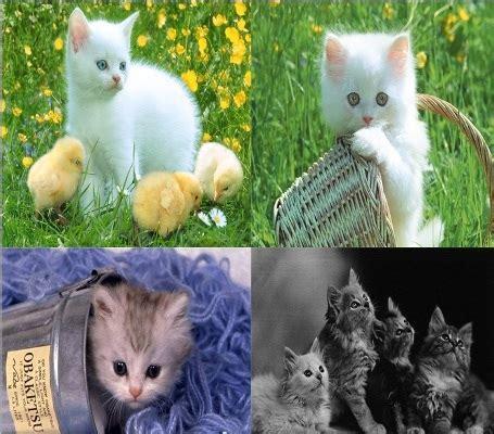Gambar Foto Kucing Lucu gambar kucing lucu imut bbt baca tulis
