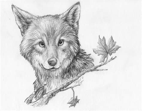 grey ink baby wolf tattoo sketch truetattoos