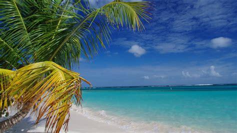 wallpaper flamenco beach culebra puerto rico palms