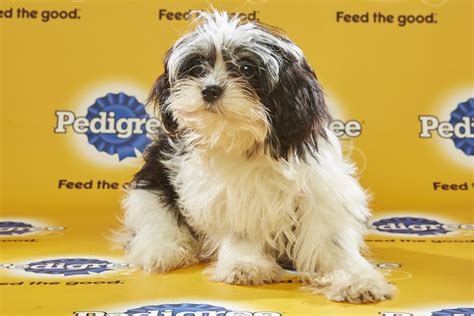 puppy bowl lineup this year s puppy bowl lineup is on on brutes