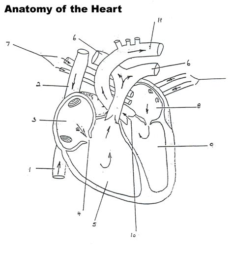 anatomy coloring book ce credits human worksheet blank professional development