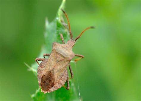 common garden insect pests common garden pests 101 homegrown garden