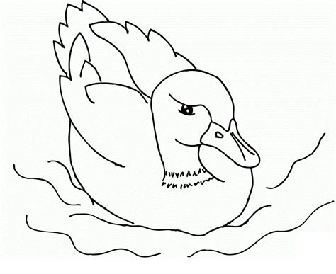 free printable coloring pages of ducks free mallard ducks coloring pages