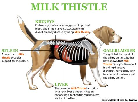 milk for dogs shih tzu liver disease diet deluxetoday