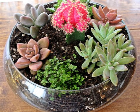 planter for succulents succulent planters dora s daily dish