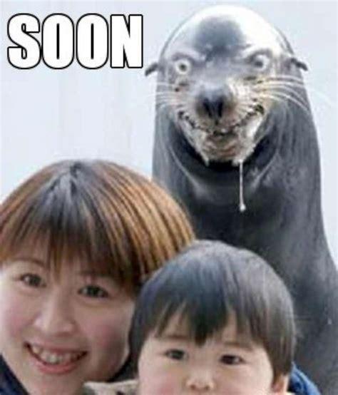 Best Memes Of 2013 - evil seal meme 50 best memes of 2013