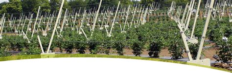 Trellis Growing Systems alf img showing gt blackberry trellis systems
