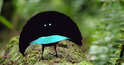 bird  paradise   sporting  bright blue
