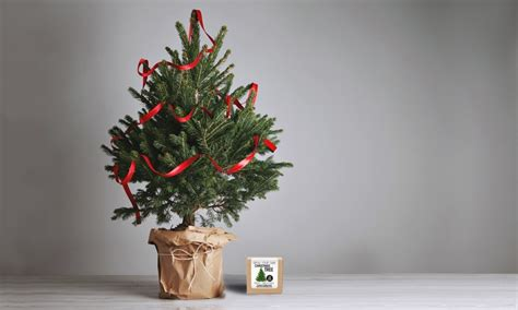 plants coupon grow your own christmas tree 62 off
