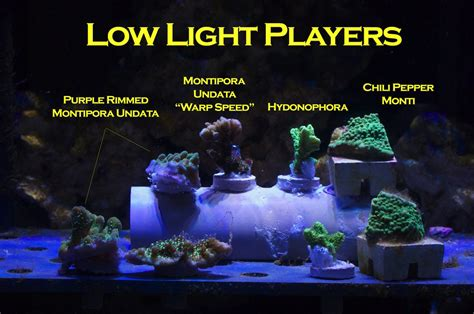 low light corals for sale mr saltwater tank s led experiment mr saltwater tank