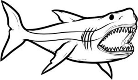 how to draw how to draw megalodon megalodon shark