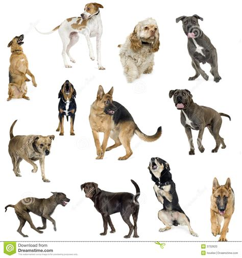12 dogs of collection of 12 dogs in different stock photo image 3752620
