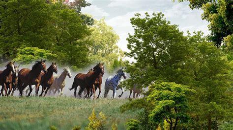 wallpaper hd 1920x1080 horses running horses wallpaper wallpapersafari
