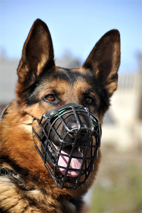 muzzle for dogs the trainer muzzles the why the how and the why not trainer