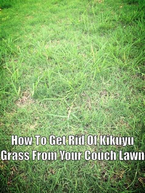 couch grass removal couch lawn care bermuda grass australia removing