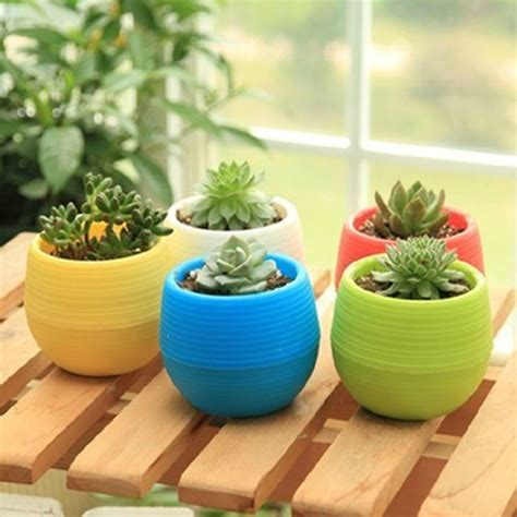 mini pot bunga hias kaktus tanaman  pcs multi color