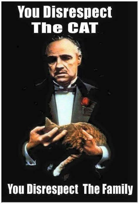 Godfather Memes - 17 best ideas about smiling cat on pinterest cats baby