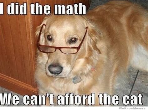 Accountant Dog Meme - i did the math weknowmemes
