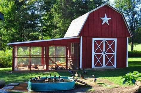 Duck Sheds by Chicken And Duck Combo Coop