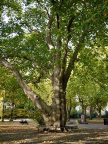 Bench Press More Old St Pancras Hardy Tree The Street Tree