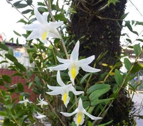 jenis tanaman hias bunga  cocok ditanam  dataran