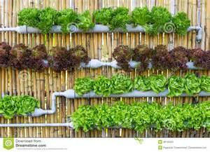 hydroponic vertical gardening stock image image 38745531