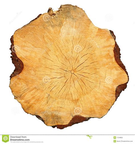 cross section cut cross sectional cut of tree stock photography image 7724852