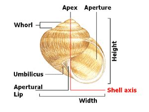 shell characters for identification