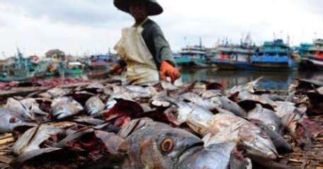 Jual Tepung Ikan Pakan Ternak jual tepung ikan