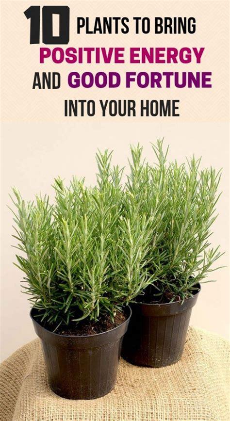 plants  bring positive energy  good fortune