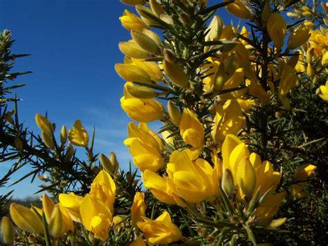 fiori di bach numeri fiori di bach vendita e consigli dalmine bergamo