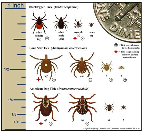 ticks pictures different types of ticks pictures to pin on pinsdaddy