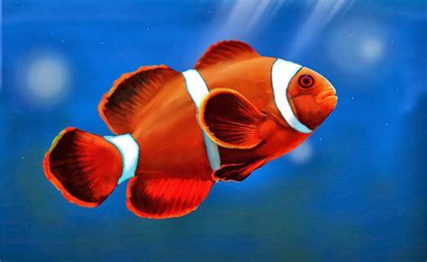 Lu Hias Untuk Motor ikan hias air laut