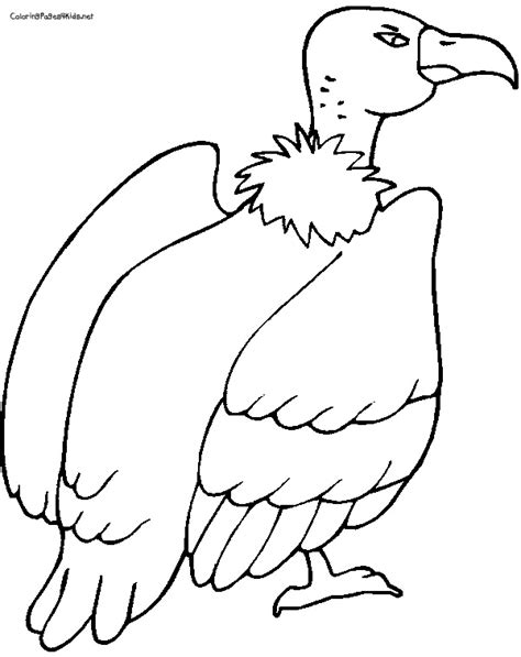 turkey vulture coloring page vulture coloring pages coloring book printable