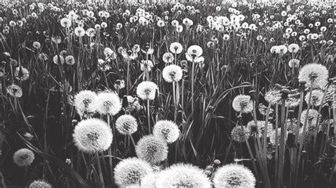 imagenes blanco y negro tumbl tumblr blanco y negro imagui