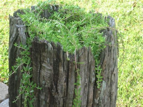 vine in tree stump free stock photos in jpeg jpg 1280x960 format for free 485 22kb