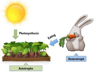 autotrophs vs heterotrophs worksheet autotrophs vs heterotrophs lesson for explanation