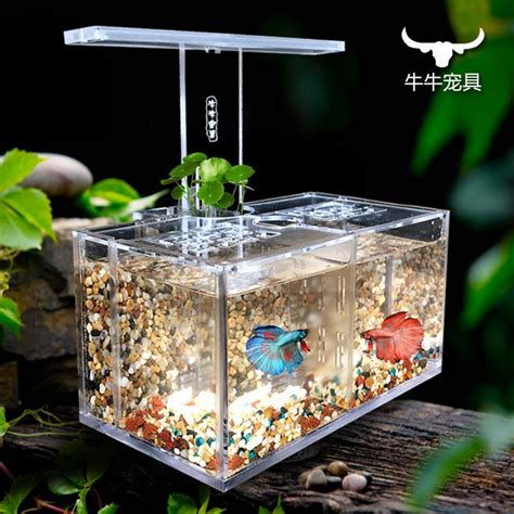 Best Fish For Office Desk Office Fish Tanks Home Design Ideas And Pictures