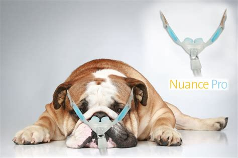 cpap for dogs nuance pro cpap bulldog